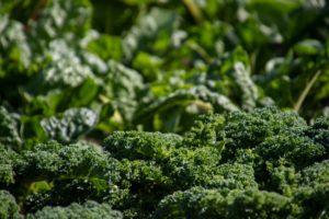 Grünkohl und Broccoli